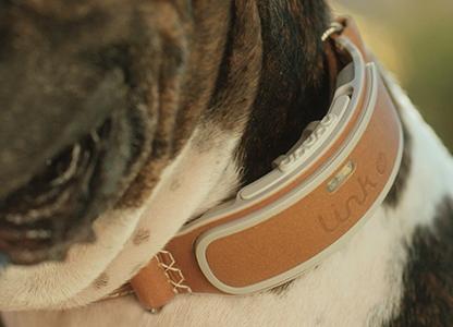 •-Link-AKC-Smart-GPS-Dog-Collar