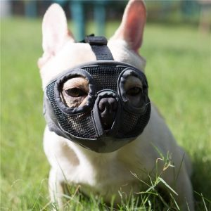 Top best dog muzzle for barking and bitting