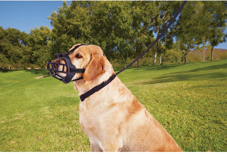 dog-muzzle-for-bitting